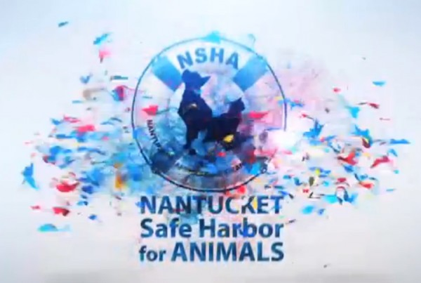 Branding Infomercial for Nantucket Safe Harbor for Animals